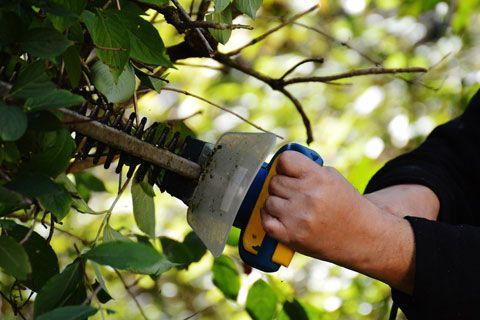 Blocker Tree & Landscape LLC - Tree Pruning